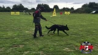 Тренинг с инвентарем и амуницией ForDogTrainers