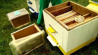 Первые пчелы! Наше пчеловодство. Выпуск 5