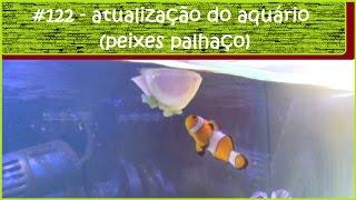Atualização dos peixes palhaços - #EP122