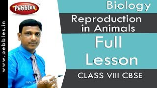 Full Lesson : Reproduction in Animals | Biology | Class 8 | CBSE Syllabus