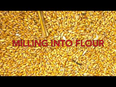 The Way of Wheat with Danny Lutz