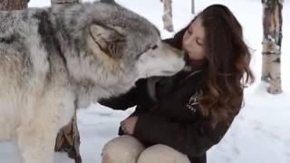 Огромный Волк. Самый крупный вид
