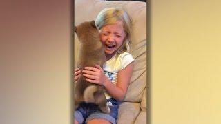 【最高のリアクション】9歳の女の子が誕生日に柴犬をプレゼントされた結果
