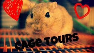 Gerbil Cage Tour *March 2014*