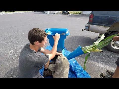 Preparing for Corn Silage Harvest