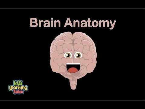 Brain Anatomy Song for Kids/Anatomy for Kids