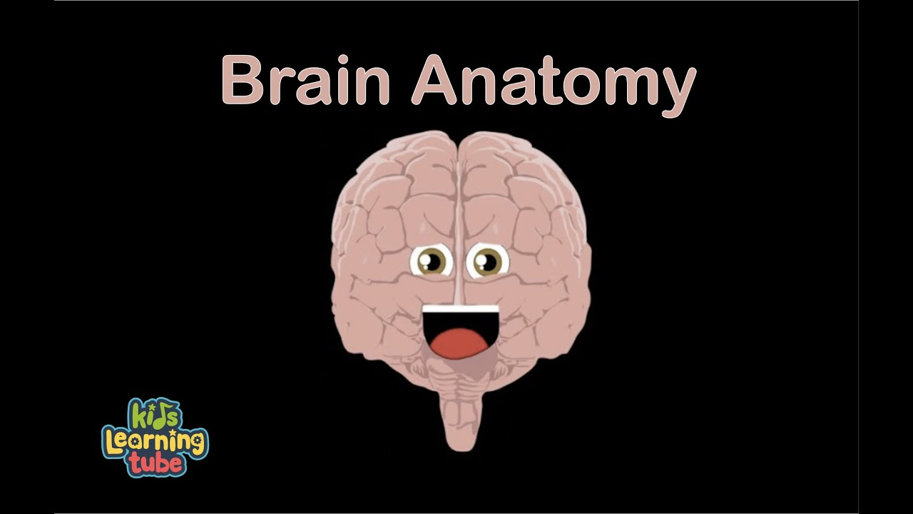 Brain Song For Kidsthe Human Body For Kidslearn About The Human