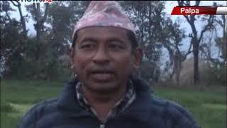 पाल्पा रामपुरमा पहिलो पटक उन्नत जातको मलाइ घासको व्यवसायीक खेती सुरु - NEWS24 TV