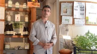 Come coltivare legalmente la Marijuana