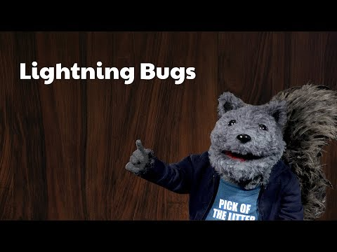Uncle Joe's Stories - The Lightning Bugs