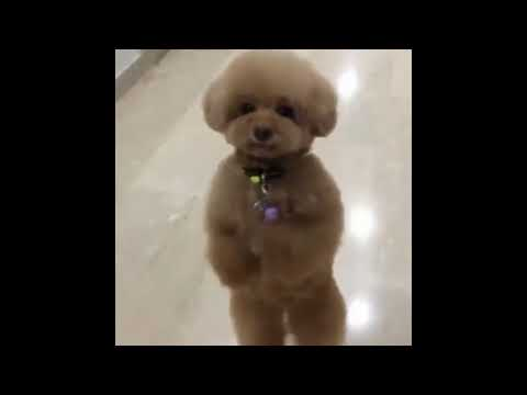 Funny Animals video compilation...some of the funny n cute animals. CuteAnimalsWorld...!!😍😍