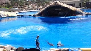 Dolphin show in Aqualand, Adeje, Tenerife