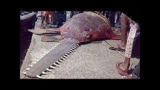 Dünyanın En Ölümcül 10 Balığı, Vücudunda Elektrikli Testere Var