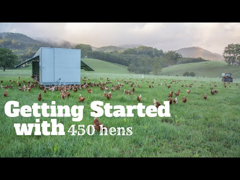 Getting Started with 450 Hens