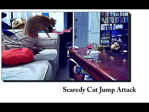 Cat Jumps Over And Over Again Doovi