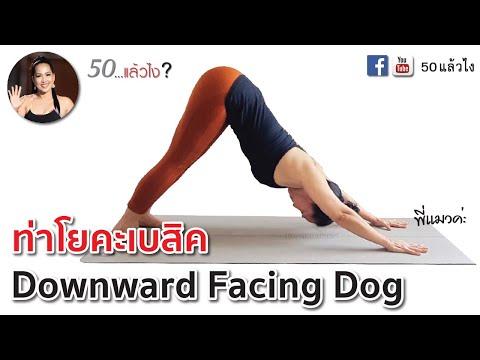 ท่าโยคะพื้นฐาน สำหรับผู้เริ่มต้นฝึก ท่าสุนัขก้มหน้า - Downward Facing Dog | พี่แมวค่ะ  เพจ 50 แล้วไง
