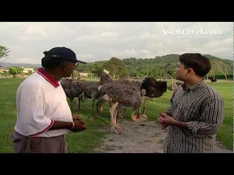 Ostrich Farm, Malaysia by Asiatravel.com