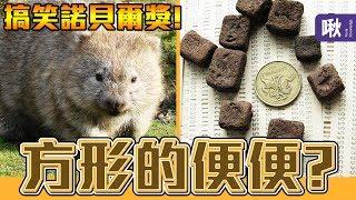 為什麼袋熊的大便是方的? 2019搞笑諾貝爾獎,台灣人得獎啦!!! | 超邊緣冷知識 第80集 | 啾啾鞋