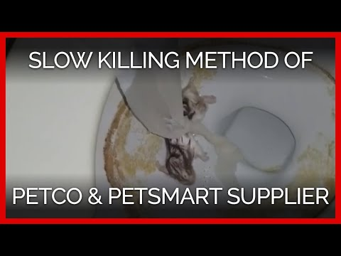 Slow Killing Method Found At Petco, PetSmart Supplier