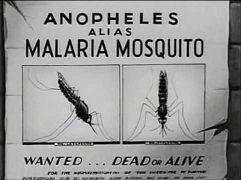 How Malaria is Transmitted 1943