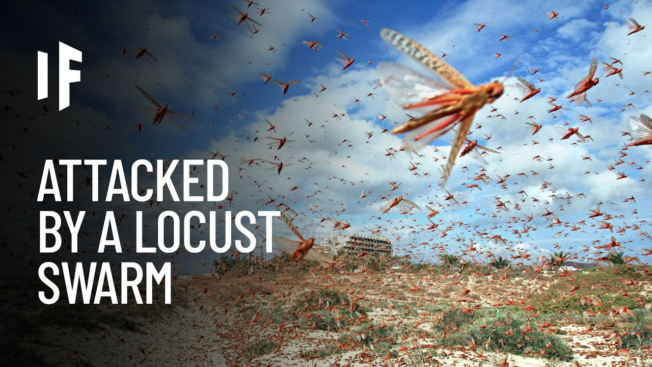 What If a Massive Locust Swarm Attacked Your City?