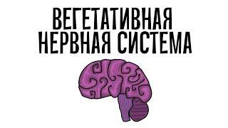 Фармакология. Вегетативная нервная система (простым языком)