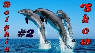 #2 Дельфинарий Немо Алматы шоу дельфинов 🐬 Dolphin show Dolphinarium Nemo Almaty