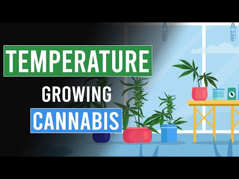 The importance of Temperature when growing Cannabis!