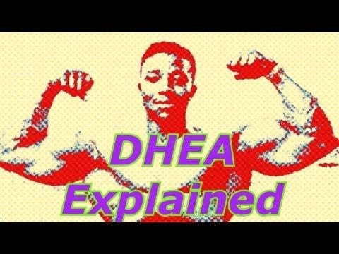 Dhea Explained