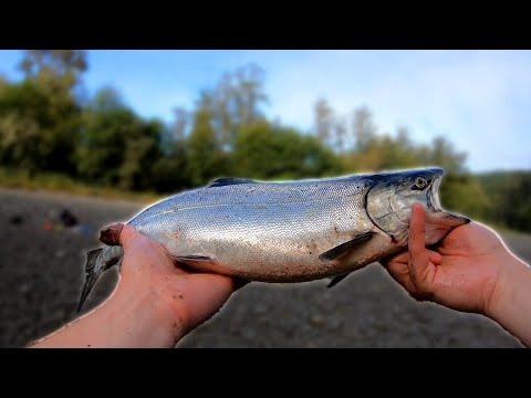 Fall Salmon Fishing In The PNW - DIME Bright Beautiful Fish! (EXCLUSIVE River!)