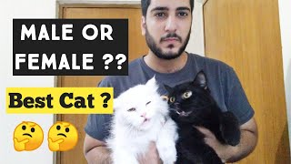 Female Cat Vs Male cat ? Which one best Best for home | Male and female Cat Benefits