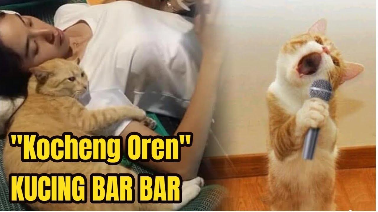 Viral Kocheng Oren Benarkah Tingkah Kucing Oranye Lebih Lincah Dari Kucing Lain