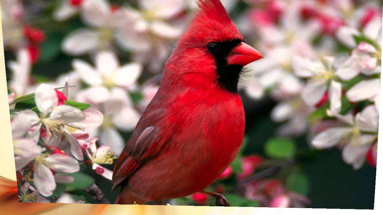Top 10 Most Beautiful And Colorful Birds