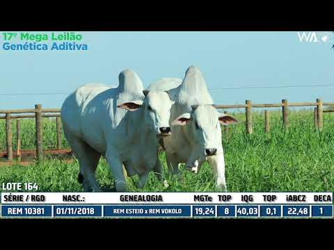LOTE 164 - DUPLO - REM 10381, REMP 779 - 17º Mega Leilão Genética Aditiva 2020