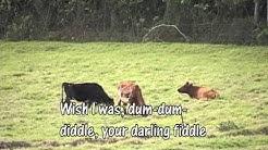 Dum Dum Diddle - Abba Karaoke