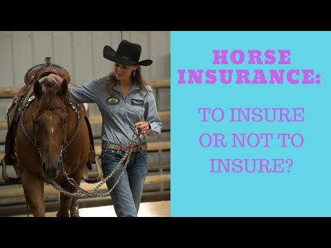 Horse Insurance: To Insure Or Not?