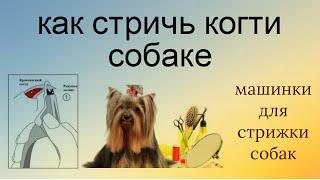 🐶⛸Как правильно стричь #когти собаке дома. Без боли!(Как подстричь когти собаке? Просто! Соблюдая несколько несложных правил. 0:09 стрижка когтей для здоровья..., 2016-06-06T18:00:03.000Z)