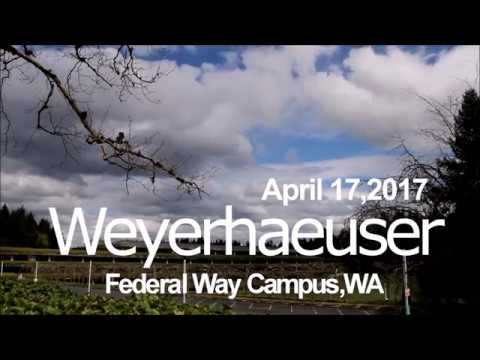 Weyerhaeuser Federal Way Campus