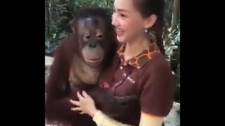 When monkey start sex in front of girls | Best of tiktok