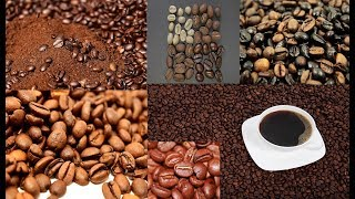 Types of coffee beans in the world ranking | Top 10 best coffee in the world