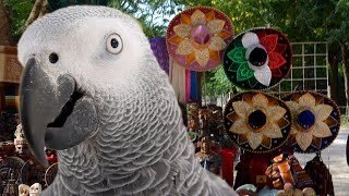 Parrot speaks Spanish after having gone missing for 4 years; Parrot cussing   Compilation