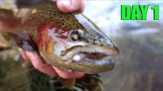Winter TROUT Fishing with Hookup Baits Day 1