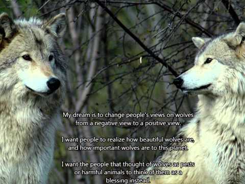 ~ The Majesty Of Wolves ~ A Cinematic Wolf Slideshow