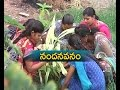 KVR Womens College in Kurnool is a Care of Address for Greenery: A Report