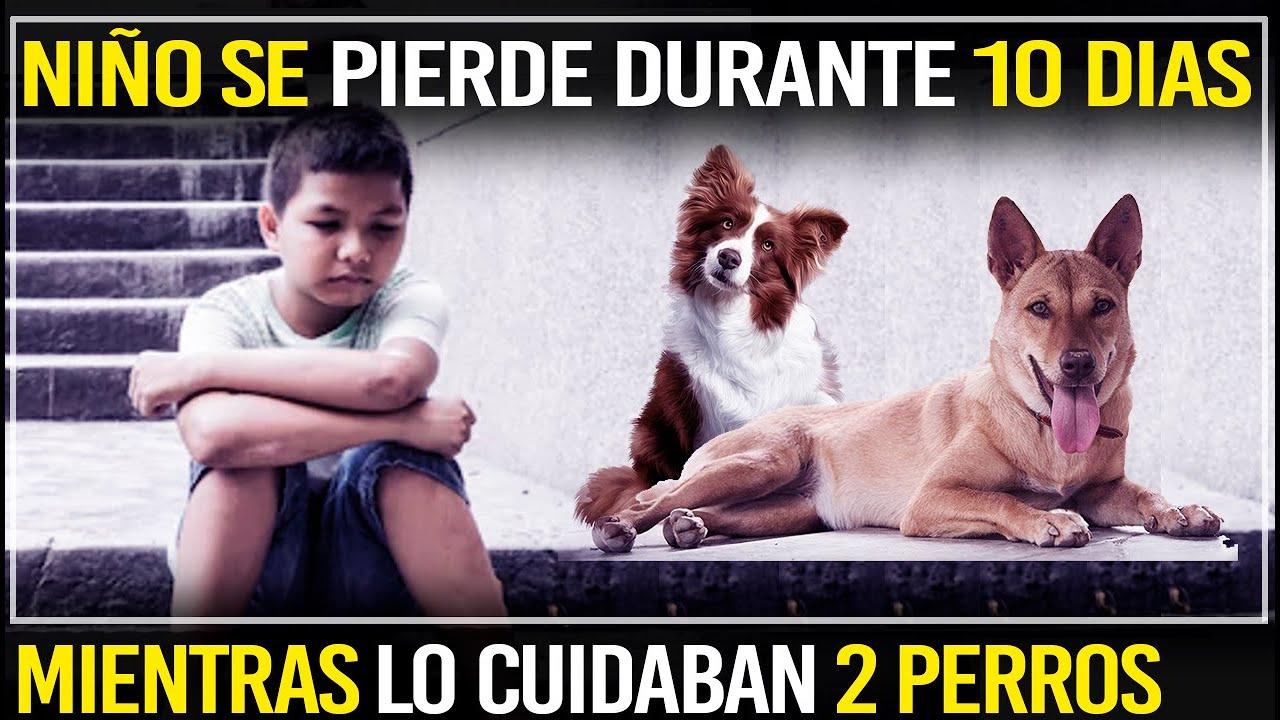 Un Niño Se Pierde Y Lo Encuentran Después De Diez Días Tras Haber Sido Cuidado Por Dos Perros