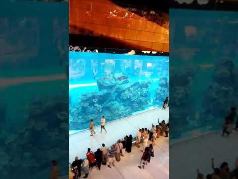 Aquarium Dubaï mal Emirates arabes unis fantastique, 😍