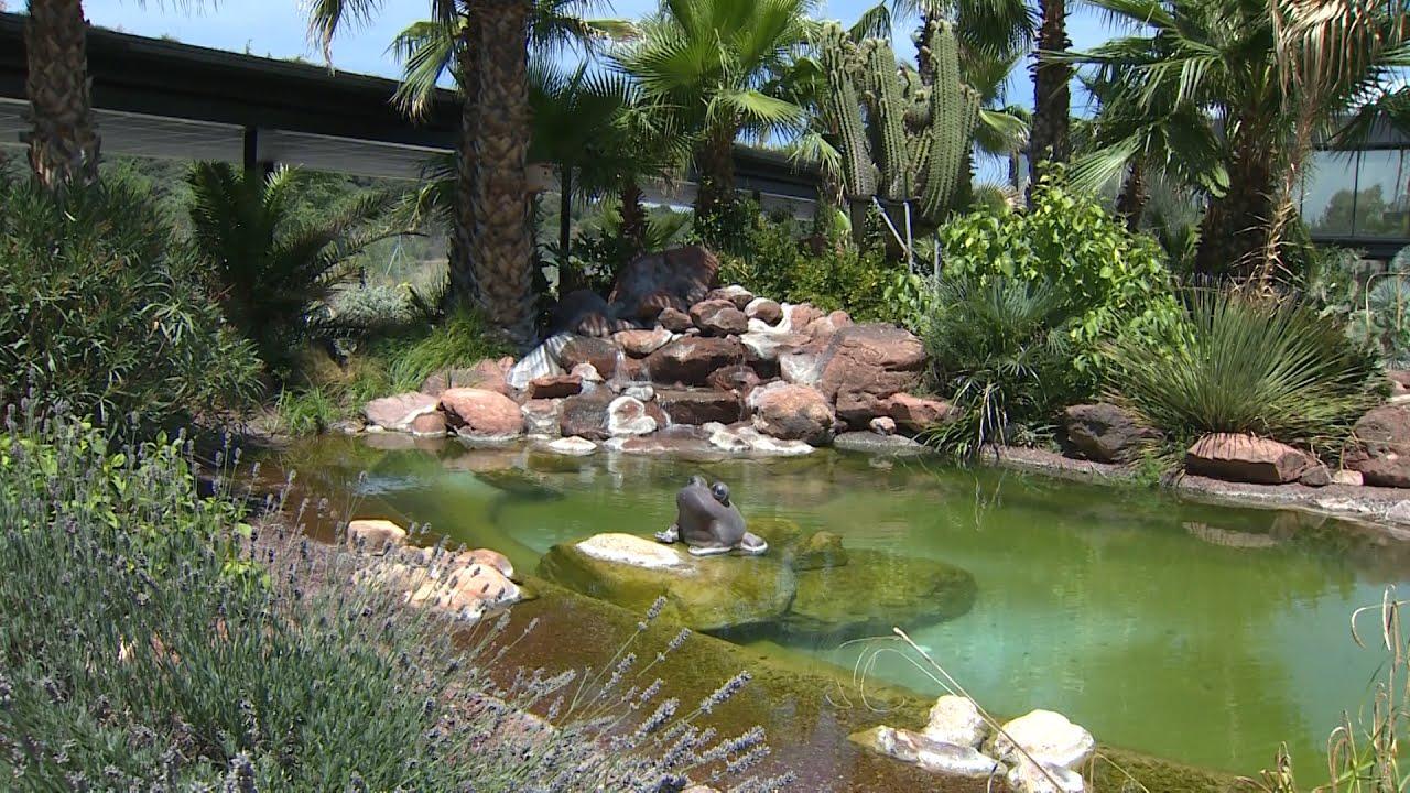 Inauguran un jard n con m s de 400 tipos de cactus youtube for Jardin cactus madrid