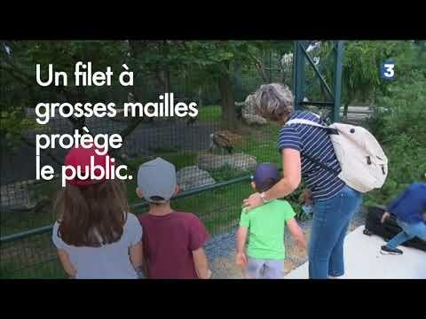 Série sur les animaux du Parc Zoologique de Paris: visite de la volière des rapaces