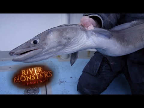 Jeremy Wade Catches a Conger Eel - River Monsters