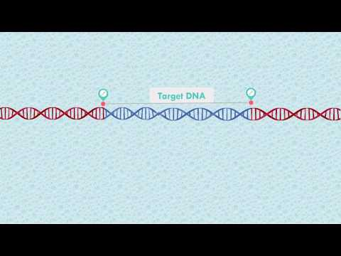 PCR Polymerase Chain Reaction Animation With PowerPoint